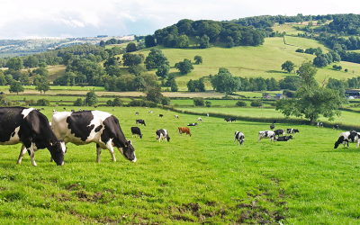 National Farmers Vice President, Paul Riniker Talks About America's Dairy Picture