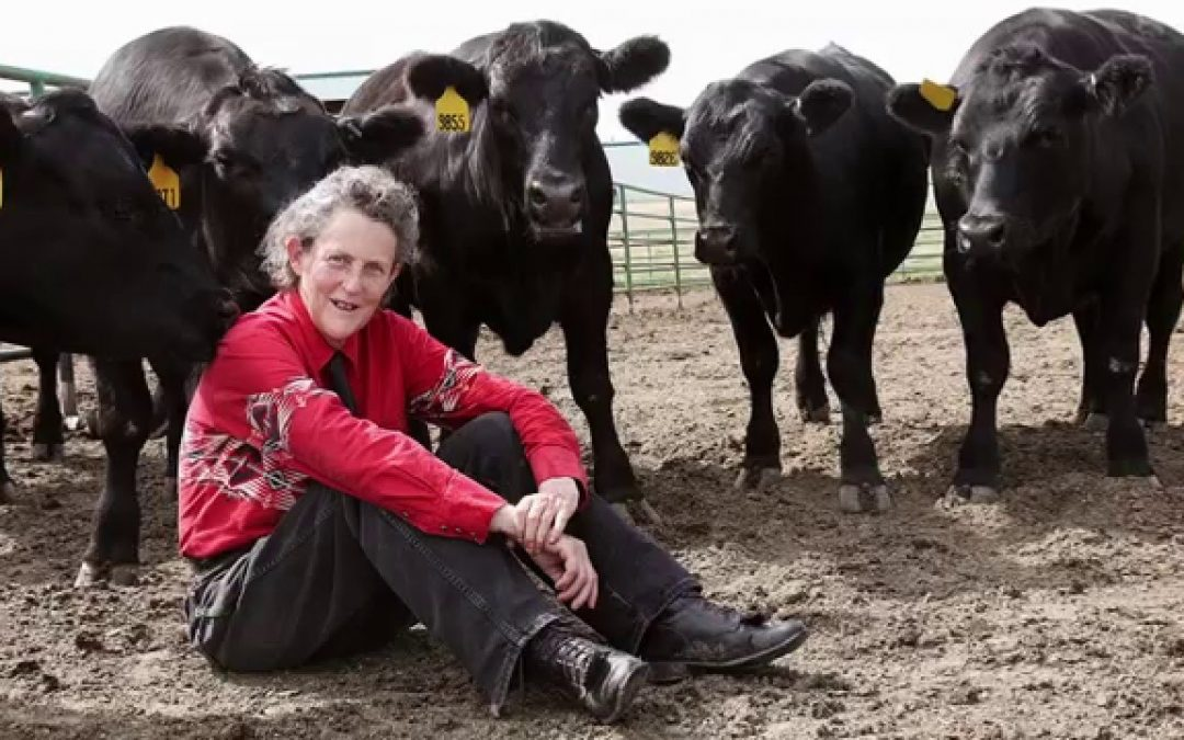 Temple Grandin Talks Stockmanship, Genetic Selection at National Farmers' Convene '19 Cattle Care and Contracting Today Workshop