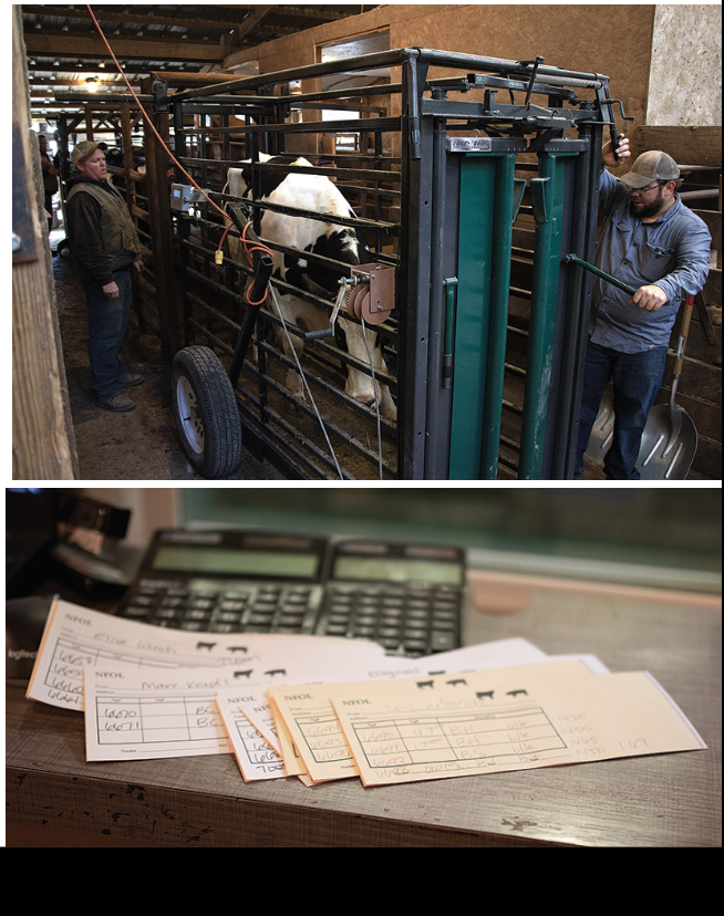 Manchester Livestock Auctions